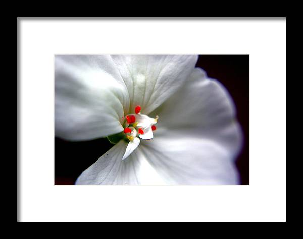 White Flower Framed Print featuring the photograph With Care by Patricia Trudell