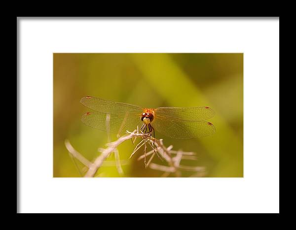 Nature Framed Print featuring the photograph With Landing Gear Down by Jeff Swan