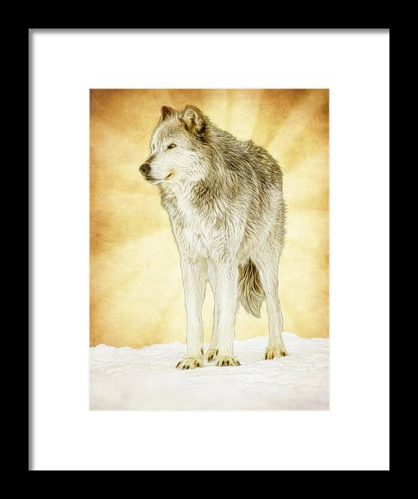 Wolf Framed Print featuring the photograph Wolf Shine by Steve McKinzie