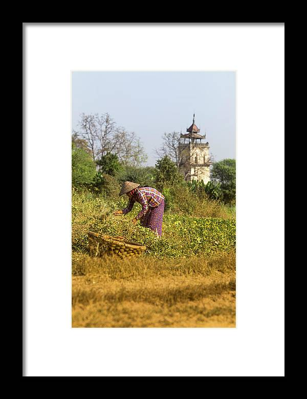 Three Quarter Length Framed Print featuring the photograph Woman Weeding At Nanmyin Tower by Merten Snijders