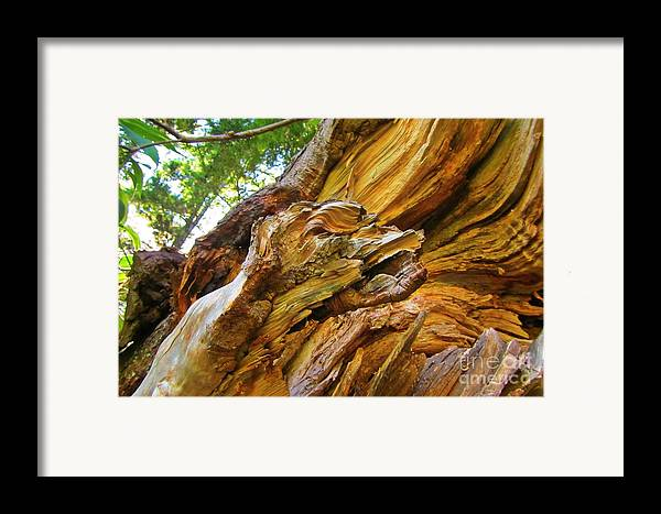 Wood Creature Framed Print featuring the photograph Wood Creature by John Malone