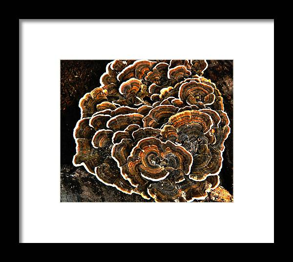 Wood Framed Print featuring the photograph Wood Fungus by Linda Segerson
