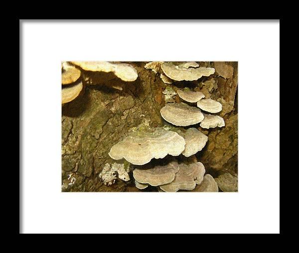 Wood Framed Print featuring the photograph Woodland 4 by Rhonda Barrett