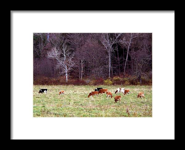 New York Framed Print featuring the photograph Woodland Dairy by Christian Mattison