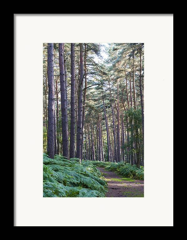 Aspley Framed Print featuring the photograph Woodland Path by David Isaacson