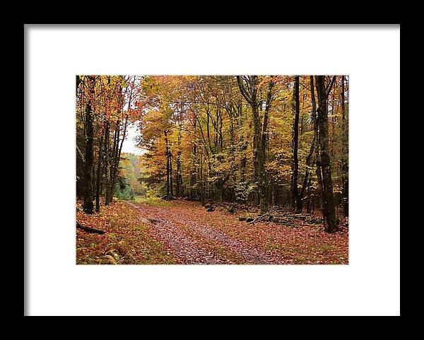 Landscape Framed Print featuring the photograph Woods walk by Lisa Kane