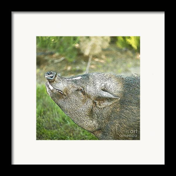 Pig Framed Print featuring the photograph Woody Smiles by Artist and Photographer Laura Wrede