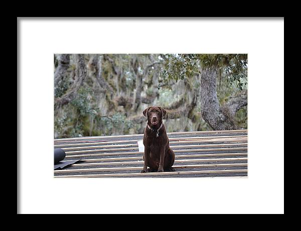 Framed Print featuring the photograph Work Of Biskets by Katrina Johns