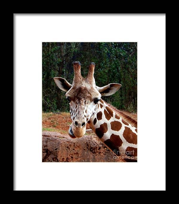 Giraffe Framed Print featuring the photograph Wuz Up Dude by Nancy Bradley