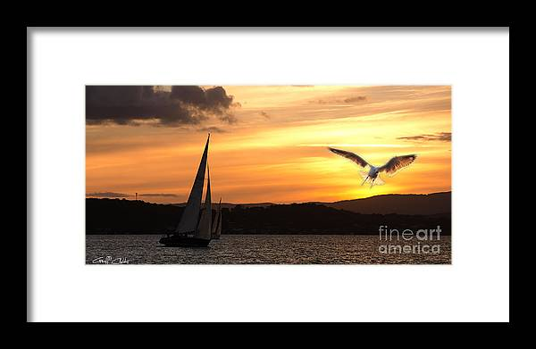 Yacht Framed Print featuring the photograph Yacht And Seagull Sunset by Geoff Childs
