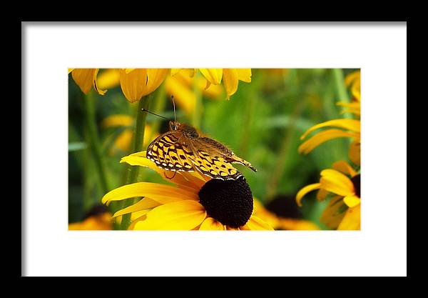 Animals Framed Print featuring the photograph Yellow And Browns by Cheryl King