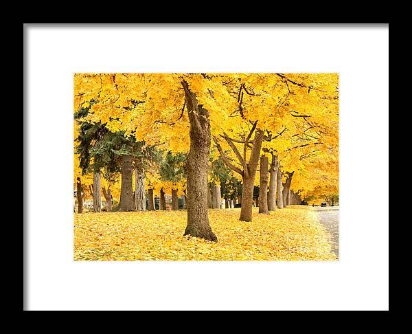 Autumn Framed Print featuring the photograph Yellow Autumn Wonderland by Carol Groenen