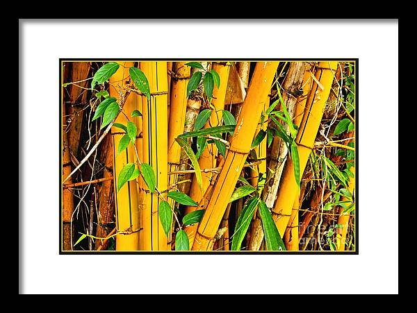 Hawaii Framed Print featuring the photograph Yellow Bamboo by Hans R Hemken