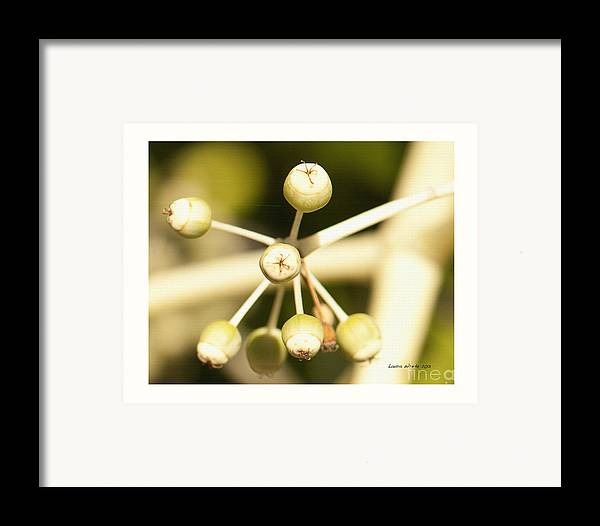 Berries Framed Print featuring the photograph Yellow Berries by Artist and Photographer Laura Wrede