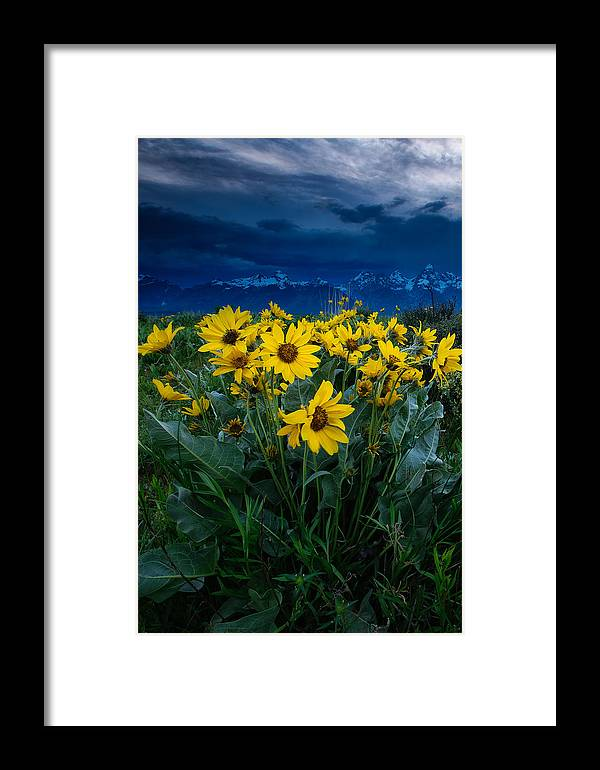 Summer Framed Print featuring the photograph Yellow Bouquet by Charlie Choc