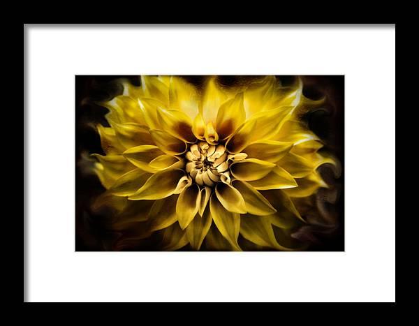 Dahlia Framed Print featuring the photograph Yellow Dahlia by Sally Bauer