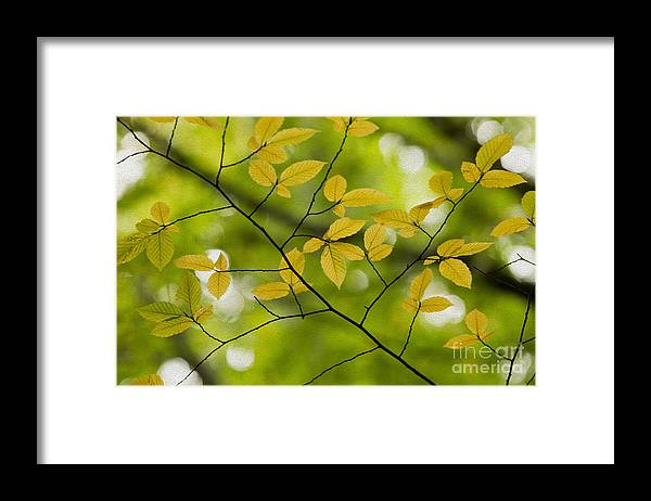 Fall Framed Print featuring the photograph Yellow Fall Leaves 2 by Rebecca Cozart