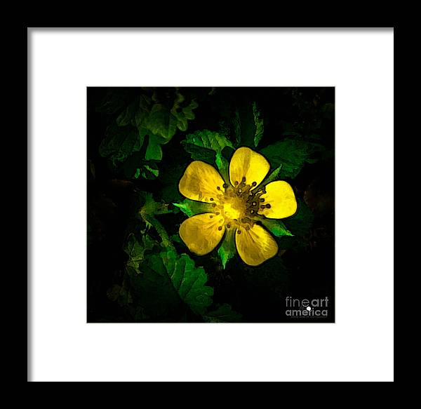 Eaton Rapids Framed Print featuring the photograph Yellow Flower by Grace Grogan