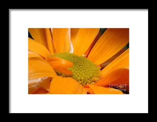 Framed Print featuring the photograph Yellow Flower II by Nel Saints