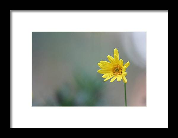 Beautiful Yellow Flower Framed Print featuring the photograph Yellow Flower by Ryan Smith