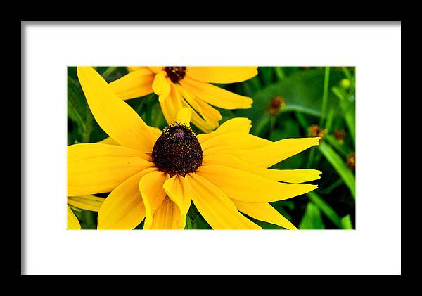 Flowers Framed Print featuring the photograph Yellow Flowers by Patrick Moore