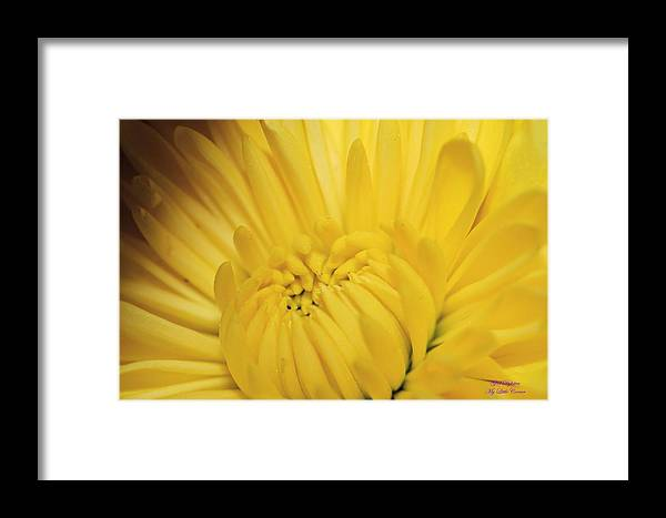 Yellow Framed Print featuring the photograph Yellow by Glenda Dykstra