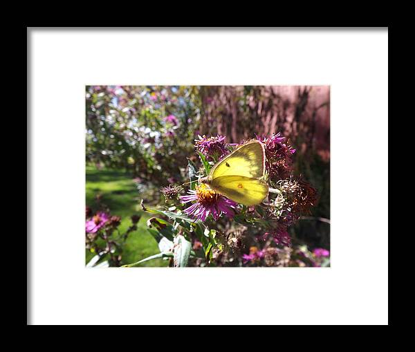 Animals Framed Print featuring the photograph Yellow Glow by Cheryl King