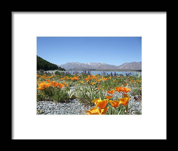 Flowers Framed Print featuring the photograph Yellow Haze by Christopher Easthall