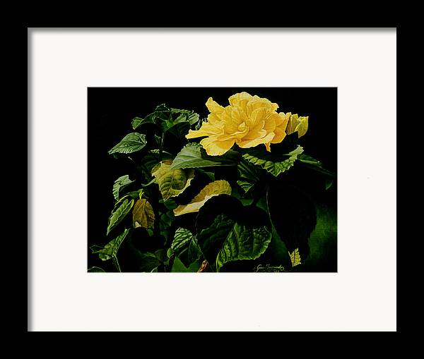 Floral Framed Print featuring the painting Yellow Hibiscus by Gary Hernandez