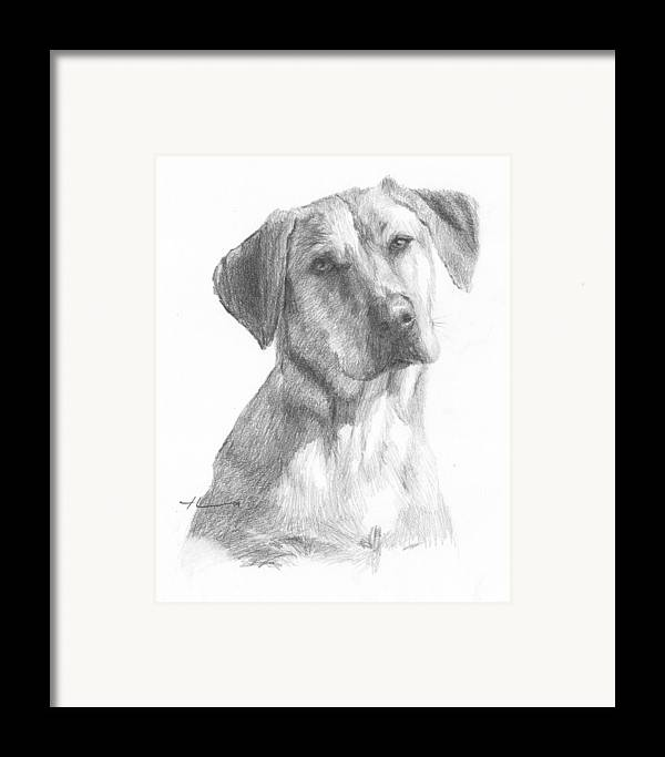 Www.miketheuer.com Yellow Lab Dog Pencil Portrait Framed Print featuring the drawing Yellow Lab Dog Pencil Portrait by Mike Theuer