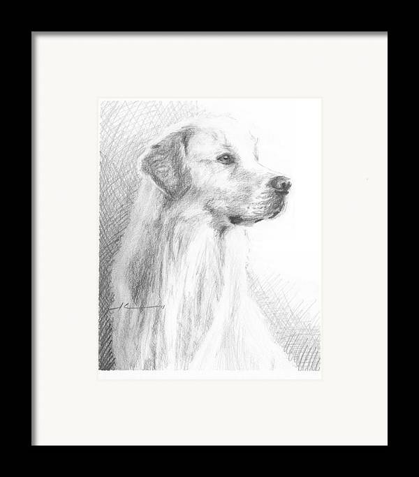 <a Href=http://miketheuer.com Target =_blank>www.miketheuer.com</a> Yellow Labrador Show Dog Pencil Portrait Framed Print featuring the drawing Yellow Labrador Show Dog Pencil Portrait by Mike Theuer