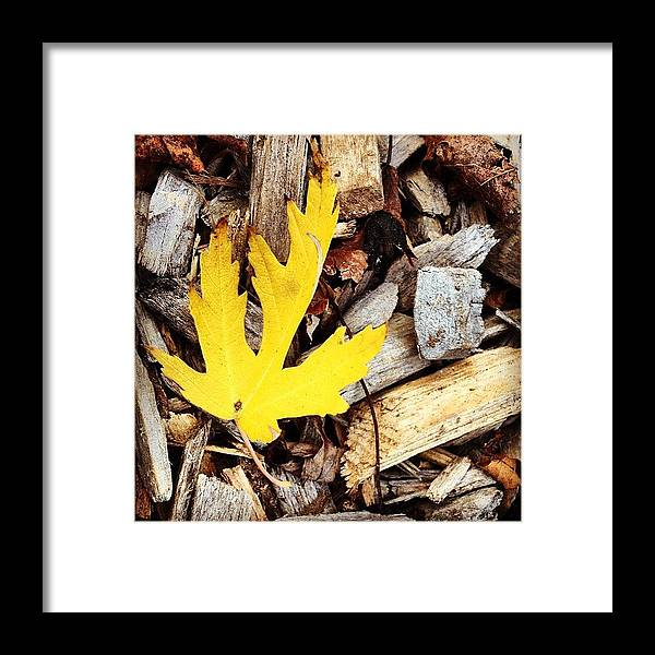 Leaf Framed Print featuring the photograph Yellow Leaf by Christy Beckwith