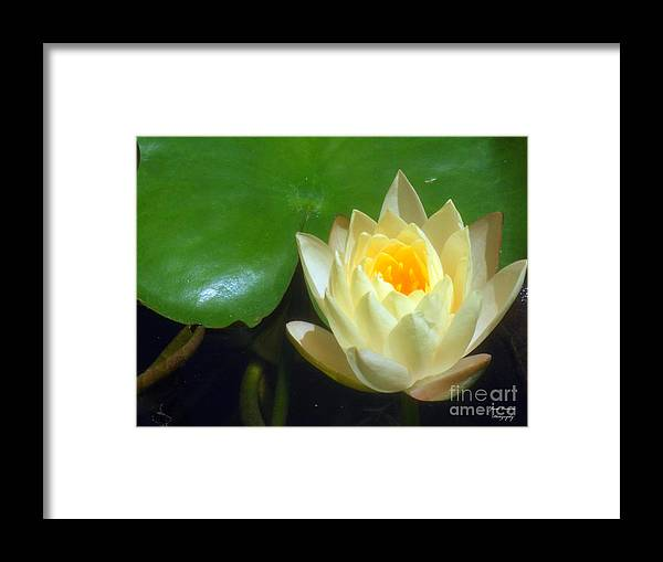 Yellow Framed Print featuring the photograph Yellow Lily by Jennifer Lavigne