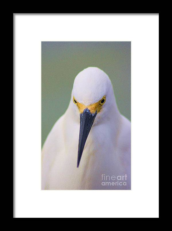 Yellow Framed Print featuring the photograph Yellow Mask by Chuck Hicks