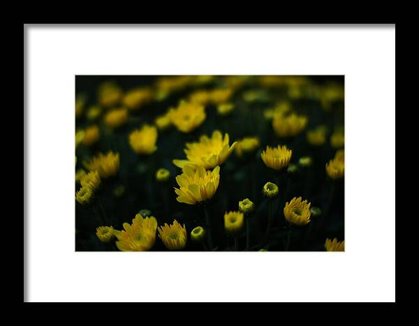 Yellow Flowers Framed Print featuring the photograph Yellow Mums by Doug Hubbard