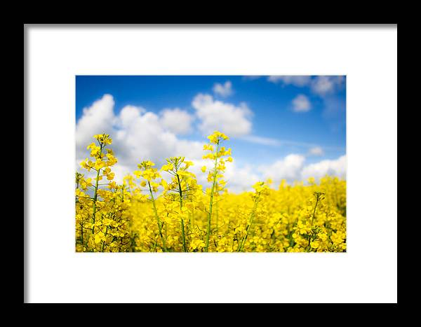 Flowers Framed Print featuring the photograph Yellow Mustard Field by Nila Newsom