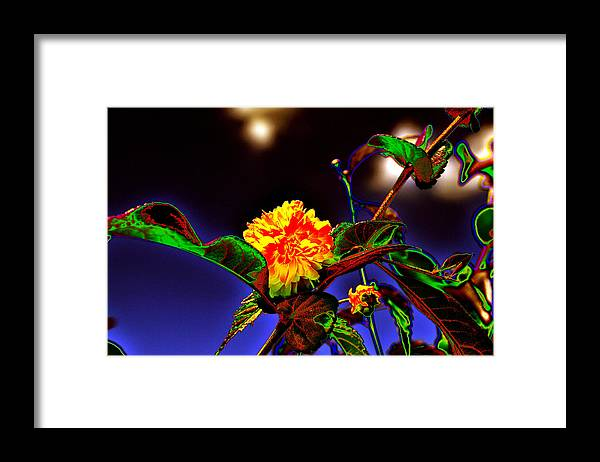 Background Framed Print featuring the photograph Yellow Queen on the morning dream by Adrian Bud