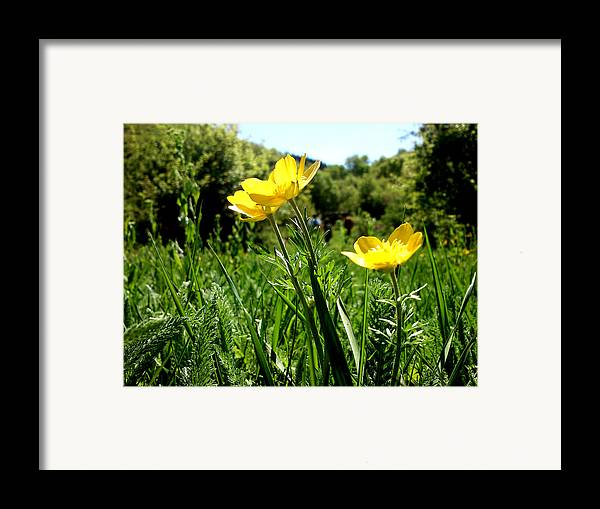 Flowers Framed Print featuring the photograph Yellows by Lucy D