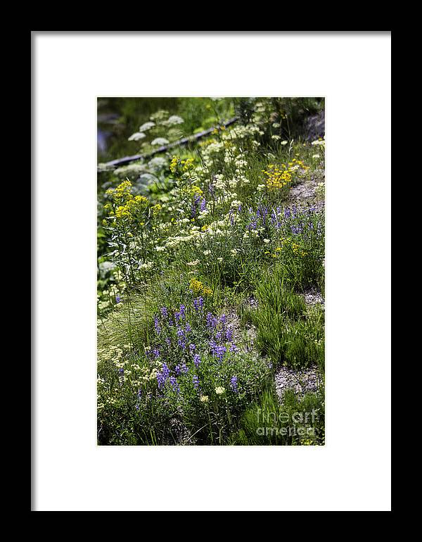 Wildflowers Framed Print featuring the photograph Yellowstone Wildflowers by Carolyn Fox