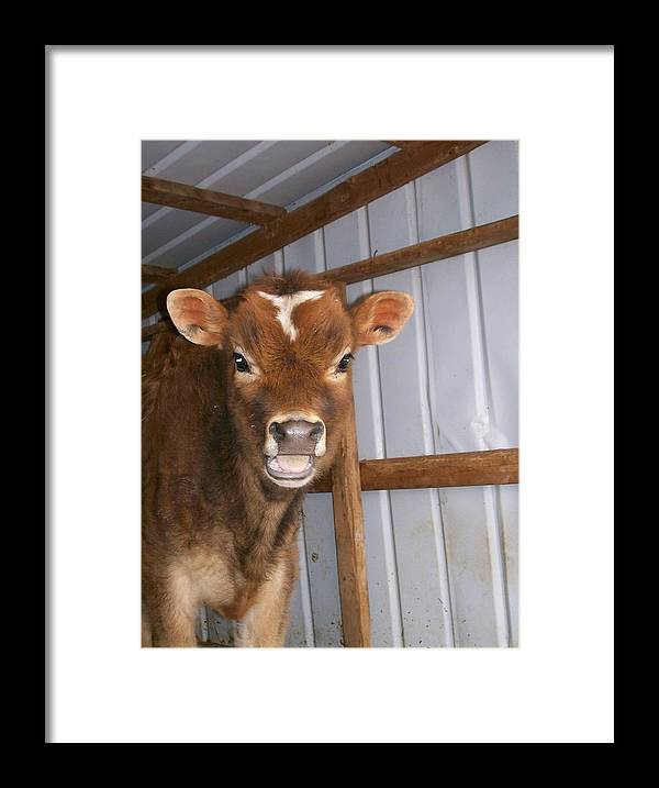 Cow Framed Print featuring the photograph Yes I'm Talking To You by Sara Raber