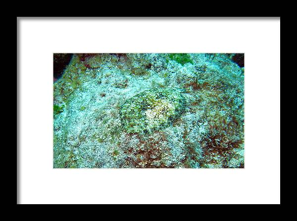 Caribbean Framed Print featuring the photograph You Dont See Me by Matt Swinden