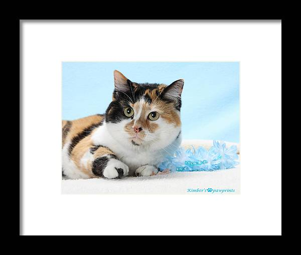 Calicoe Cat Photo Framed Print featuring the photograph You Had Me At Meow..... by Kimber Butler