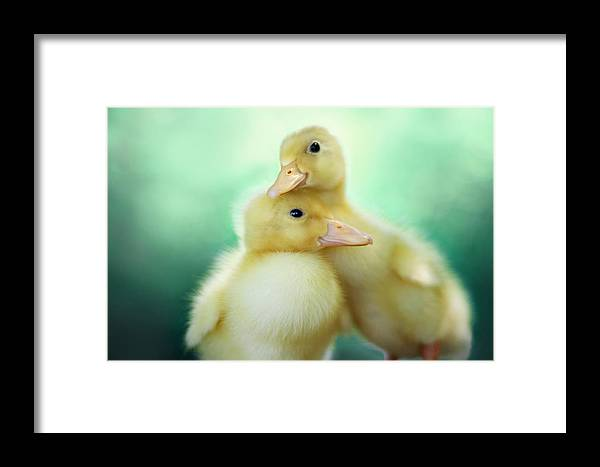 Duck Framed Print featuring the photograph You Make Me Smile by Amy Tyler
