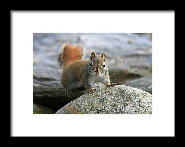 Animal Framed Print featuring the photograph You Wanna Chat by Deborah Benoit