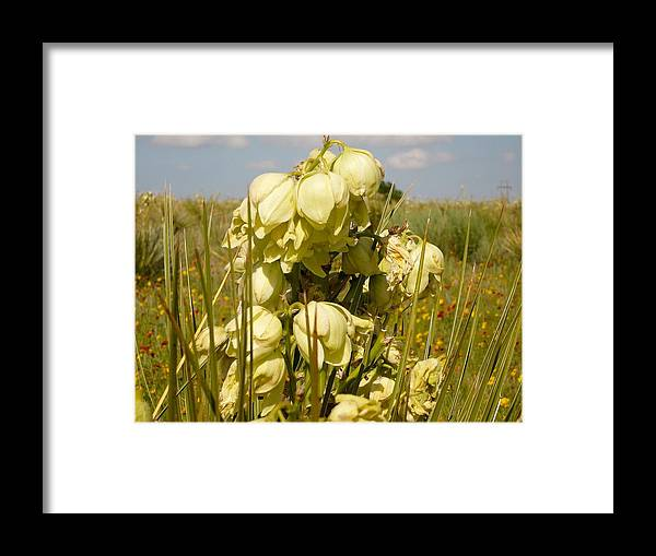 Flower Framed Print featuring the photograph Yucca by David Pennington Sr
