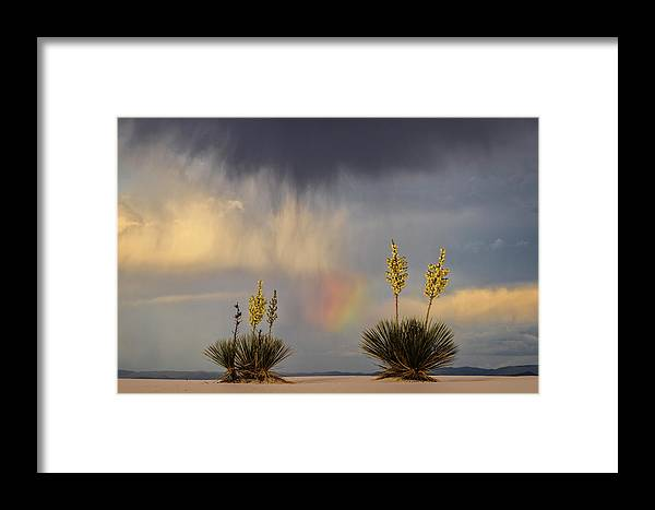 Tranquility Framed Print featuring the photograph Yuccas, Rainbow And Virga by Don Smith