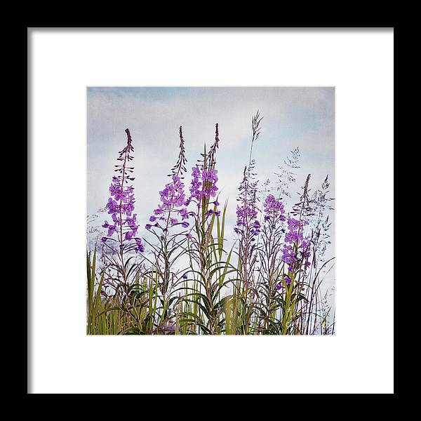 Fireweed Framed Print featuring the photograph Yukon State Flower by Priska Wettstein