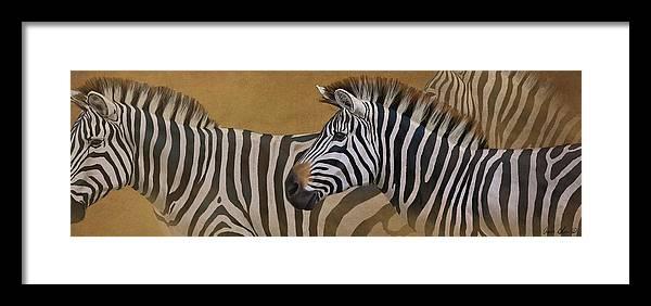 Zebra Trio Framed Print by Aaron Blaise