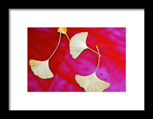 Raindrops Framed Print featuring the photograph Zen Moment by Ira Shander