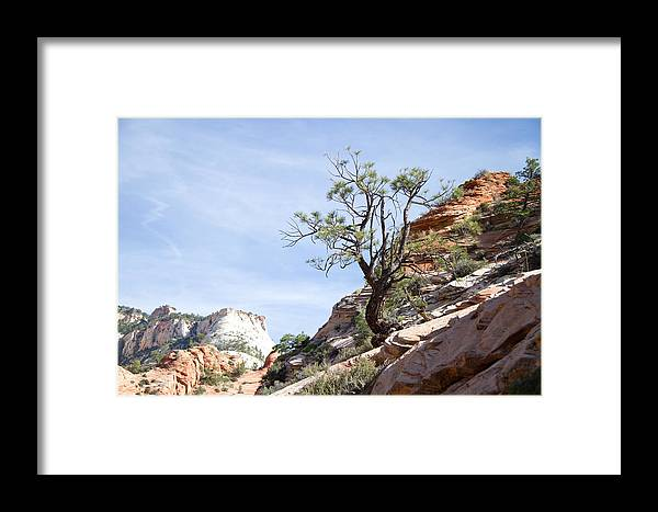 Tree Framed Print featuring the photograph Zion National Park 1 by Natalie Rotman Cote